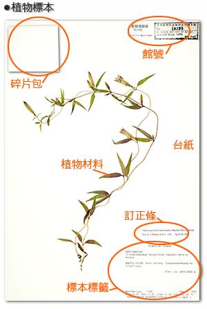 [印标]植物标本制作
